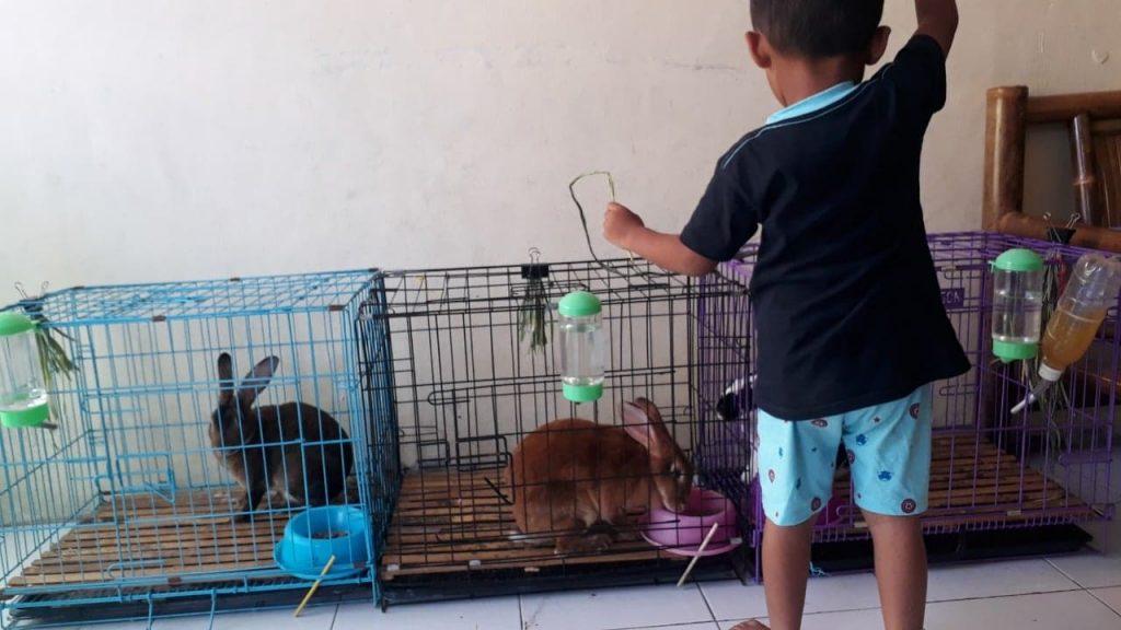 Project 1 Homeschooler-Wisy: Breeding Kelinci 3