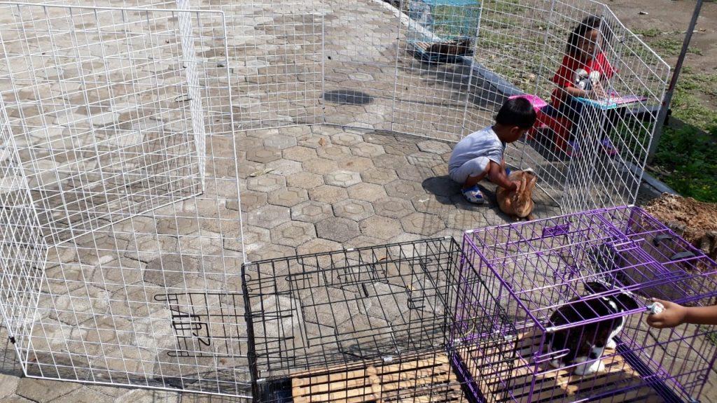 Project 1 Homeschooler-Wisy: Breeding Kelinci 5
