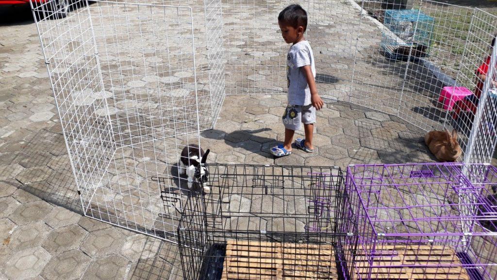 Project 1 Homeschooler-Wisy: Breeding Kelinci 2