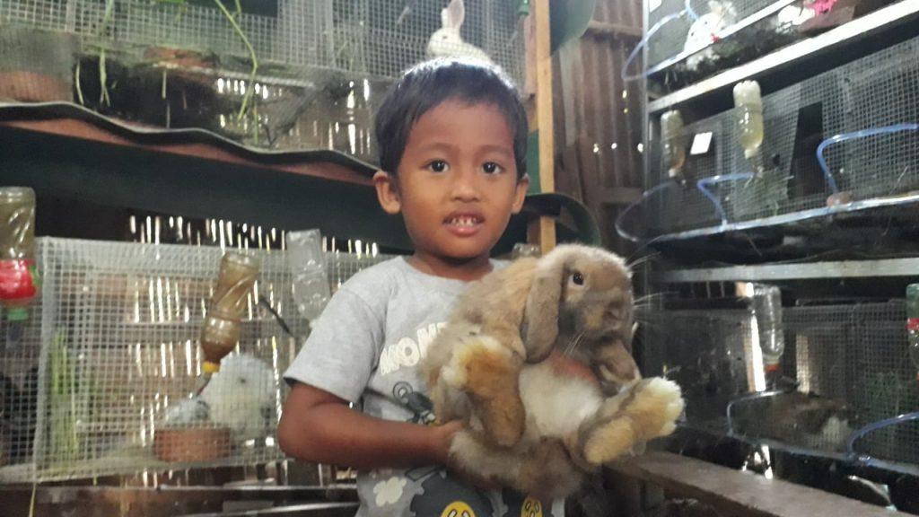 Project 1 Homeschooler-Wisy: Breeding Kelinci 4