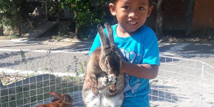 Project 1 Homeschooler-Wisy: Breeding Kelinci 1