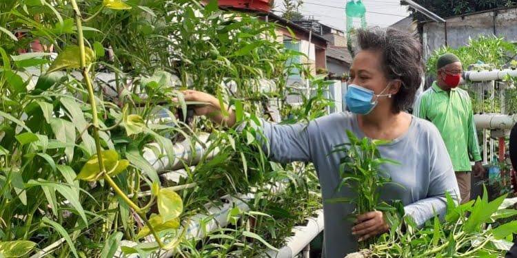 Bertanam di Lahan Sempit, Bangun Ketahanan Pangan Rumah Tangga 1